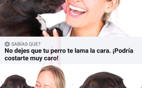 Cuidado con besar a los perros...