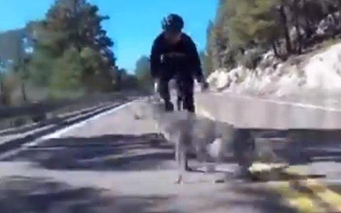 Ojo ciervo