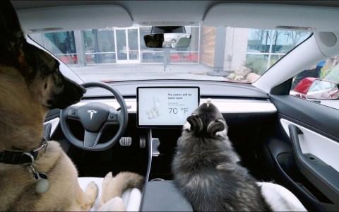Los nuevos Teslas tienen un modo especial para dejar a tus perros en el coche a una temperatura constante y segura para ellos
