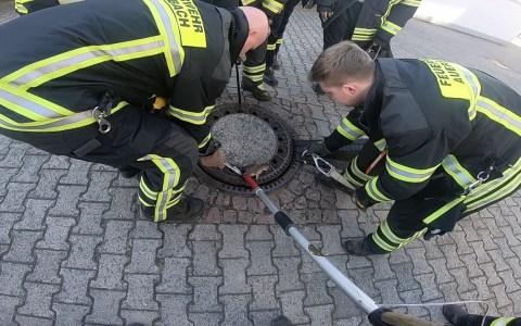 Bomberos rescatan a una rata obesa atascada en una alcantarilla