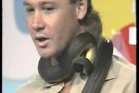"""Steve Irwin, la versión chucknorriana de Frank De La Jungla: """"no me muerde porque no podría comerme, y no se siente amenazada..."""""""