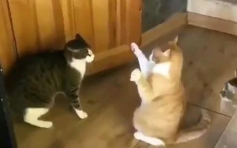 La versión felina de Eduardo Inda