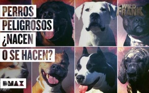 Perros peligrosos: ¿Nacen o se hacen?