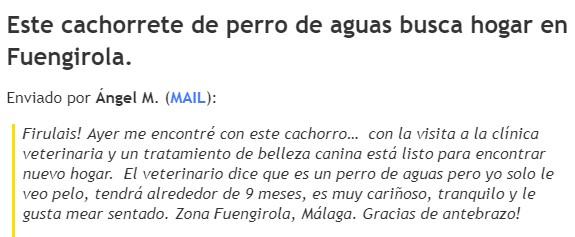¿Os acordáis de este Firulais de aguas que andaba perdido por Fuengirola?