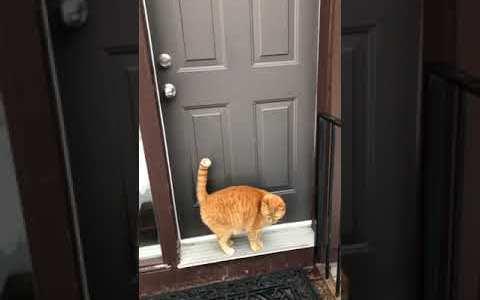 Un gato llamando a la puerta