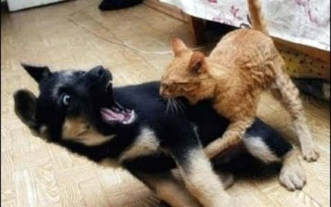 Gatos ninjas vs perros