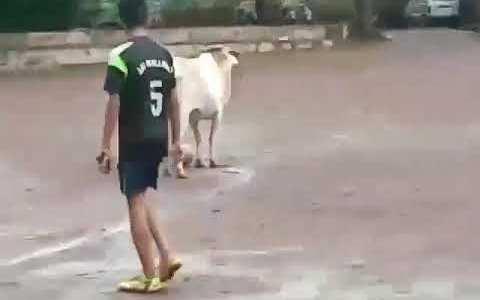 La vaca campeona del mundo en posesión de valón