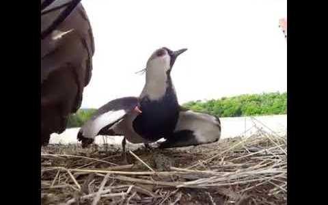 Los huevos de una madre