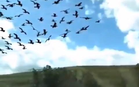 El otro día grabé un grupo de pájaros en cámara súper lenta mientras estaba en el tren