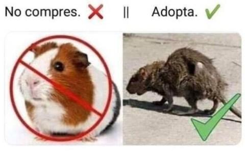 AdoptaUnaRata.com