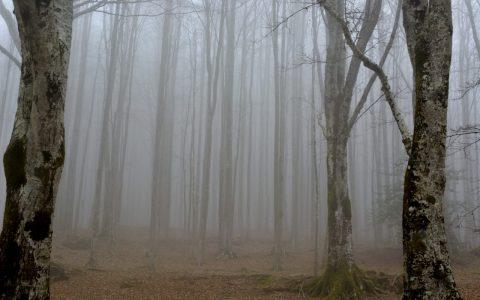 Cada día, millones y millones de árboles son plantados en Turquía y otras partes del mundo