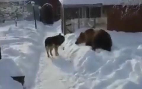 - ¡¡¡Acho, que soy un oso!!!