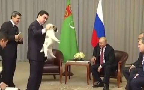 Imagina ser el tío que agarra el cachorro como un monstruo, y que hasta el propio Vladimir Putin tenga que salvarlo