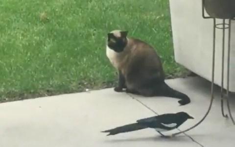 - No hay huevos a morderle la cola al gato