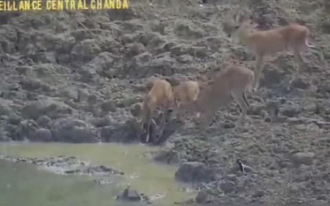 ¿Por qué se acercarán esos ciervos al agua con tanto cuidado?