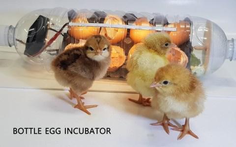 Cómo hacer una incubadora de pollos usando una huevera y una botella de agua