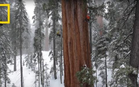 El Presidente: La foto del segundo árbol más grande del mundo compuesta por 126 imágenes