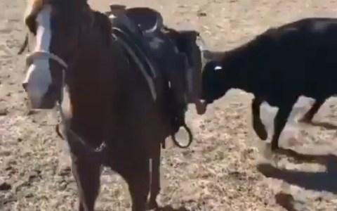 El caballo colega