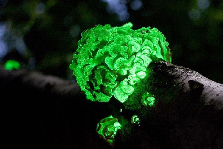 Recopilatorio de hongos que parecen alienígenas