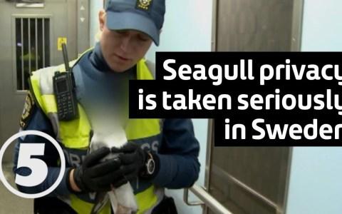 La policía sueca se toma realmente en serio la privacidad: difuminan la cara hasta de una gaviota