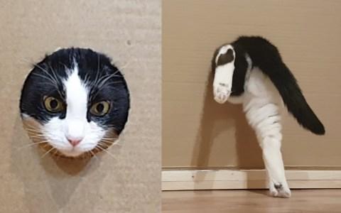 Reduciendo poco a poco el agujero de entrada a un gato