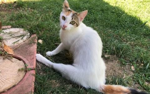 """Sigue a una gata que claramente decía """"sígueme, humano"""" en idioma gatuno, y se encuentra a una camada entera de gatetes recién nacidos"""