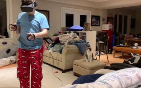 Un gato mira a un humano mientras juega con sus gafas de realidad virtual