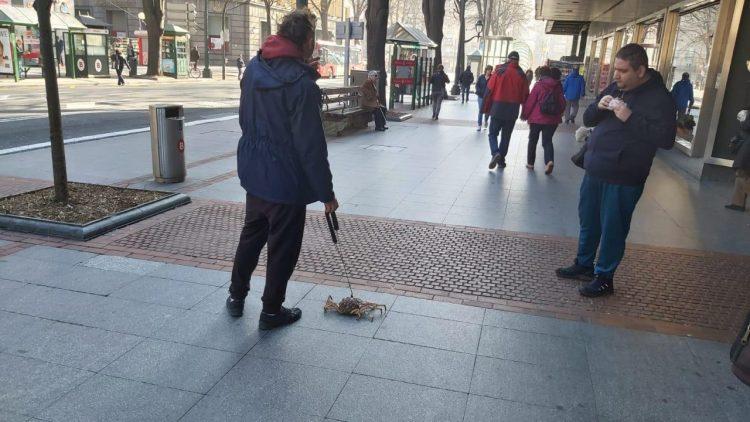 Sí, hay un tío paseando un centollo por la Gran Vía de Bilbao...