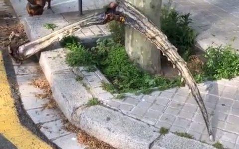 """Extraña pata """"arácnida"""" gigante encontrada en la Barceloneta"""