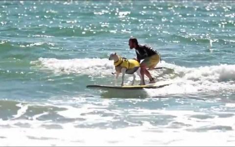Cuando pienses que las drojas te han afectado al cerebro, recuerda a este tío que hace surf con una cabra