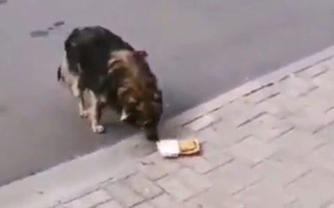 Ese perro tiene más criterio culinario que el 90% de los humanos