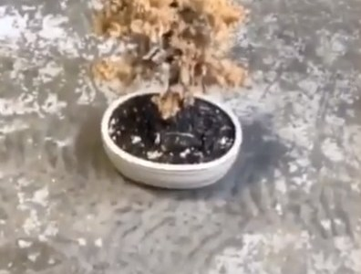 Cuando tu novia te pide que le riegues las plantas...