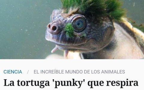 Aguanta, tortuga punky