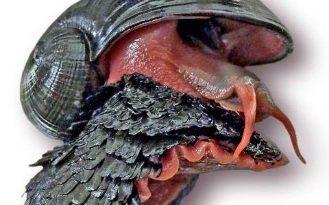 Misterio de caracoles con conchas de hierro que sobreviven dentro de volcanes candentes