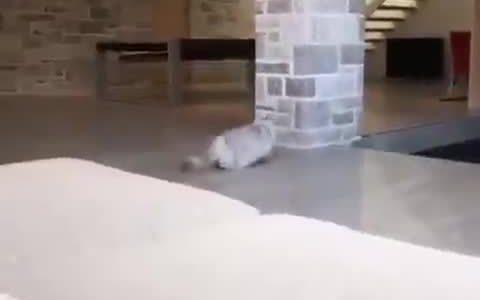 Te quiero gatito Backflip