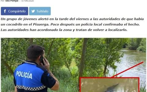 La vida se abre camino: Avistan un cocodrilo en el río Pisuerga