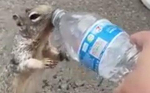 Una ardilla pidiendo agua a unos humanos