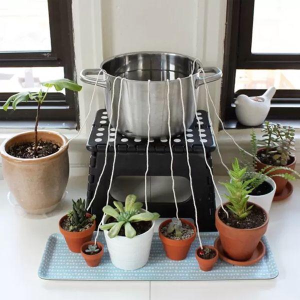 ¿Te vas de vacaciones y no quieres que a tus plantas les llegue la morisión?