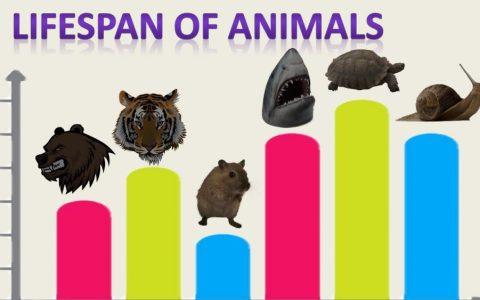 ¿Cuánto viven los animales?