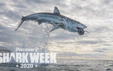 Salto más alto jamás grabado a un tiburón