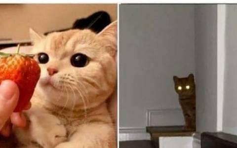 La única razón por la que tu gato no te ha matado aún, es porque eres su único medio para conseguir comida