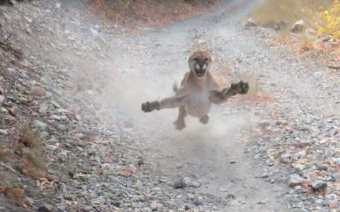 Un runner se encuentra cara a cara con un Puma y es perseguido durante 6 largos y agónicos minutos