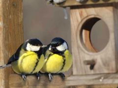 Права и обязанности созаёмщика по ипотеке