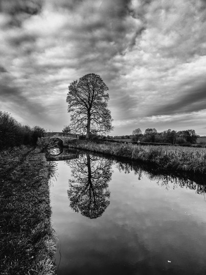 Tree and Canal