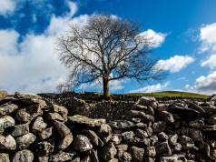 Malham Tree