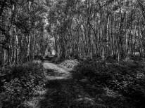 Bettisfield Track