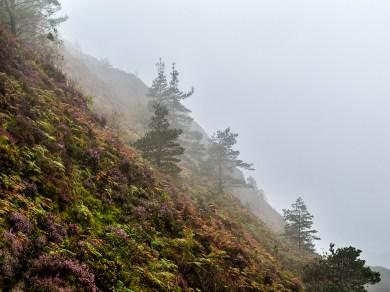 Precipice Mist