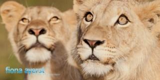 Zorgfontein 17 March 2012-173712Copy 1