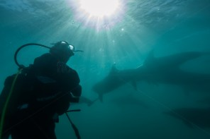 a diver watches the spectacle