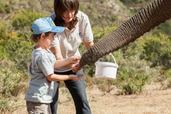 giving some treats with Arina van Rooyen- elephants are slobbery when they eat